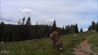 "Craft Bike Transalp 2014, team ""The Cubendales"""