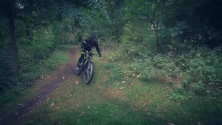 Pinewood forest XC