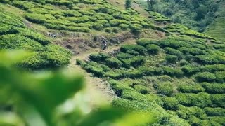 Single Track Kerala – Sydindien Curry Trail