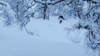 Powder day at Sogndal Skisenter Hodlekve - Daniel Furberg - 7months ago