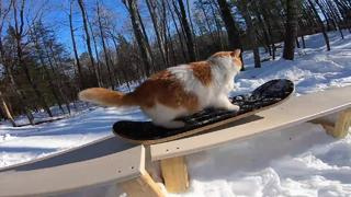 Taddy Snowskate 2020 Best Cat Skate Video Ever! - 11mån sedan